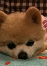 一张可爱的小狗的照片