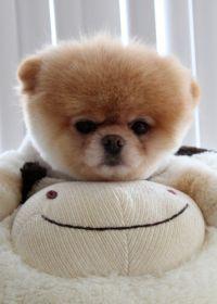 世界可爱小狗照片
