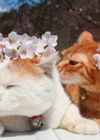可爱动物小猫照片