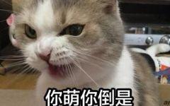 猫表情图带字