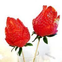 微信头像花朵图片玫瑰花