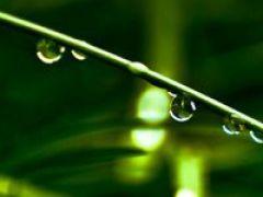 植物花草图片微信头像