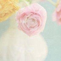 女人微信头像花朵图片大全