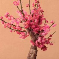 微信头像花朵图片腊梅