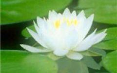 微信头像莲花图片