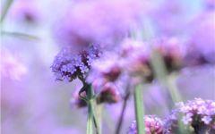 微信头像风景花朵图片大全