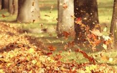 落叶唯美伤感图片