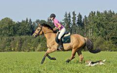 骑马照片唯美图片大全