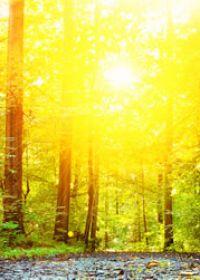 阳光照片唯美风景图片