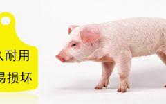猪的表情包无字图片