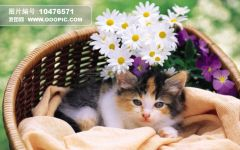 可爱小猫猫图片