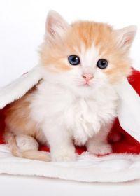 猫的照片可爱 卖萌