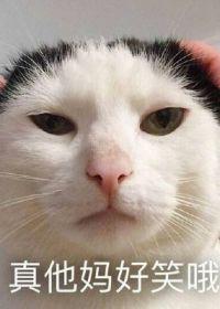 斗图可爱猫