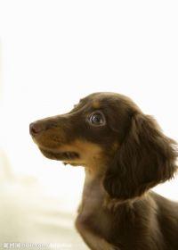 小狗照片可爱 宠物