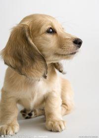 美丽可爱小狗照片
