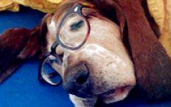 戴眼镜狗狗图片qq头像