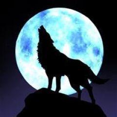 西伯利亚狼图片qq头像