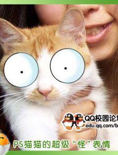 猫搞怪表情p图