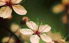 微信头像花卉图片大全