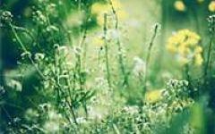 微信头像春天风景图片大全