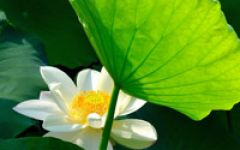 信佛人的微信头像图片