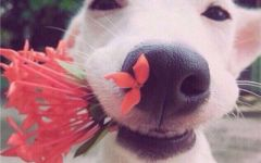 狗年微信头像图片