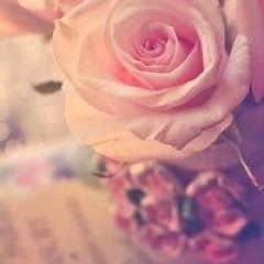 微信头像鲜花唯美图片