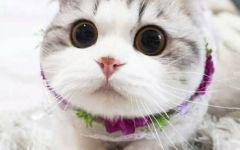 可爱萌猫图片