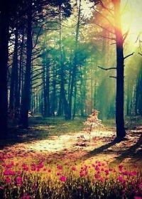 森林梦幻唯美意境图片