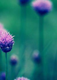 唯美图片花朵意境图片