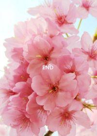小清新唯美图片花朵