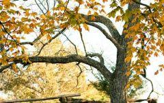 落叶唯美意境图片