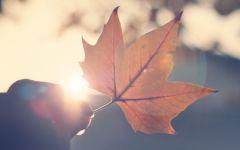 落叶唯美图片