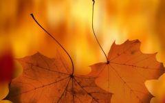 唯美落叶图片