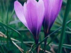植物花草图片微信头像图片
