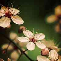 微信头像花朵图片大全唯美图片