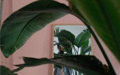 微信头像植物图片