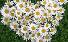 植物微信头像图片大全