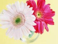 手机微信头像图片花朵唯美