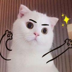 微信头像动物猫