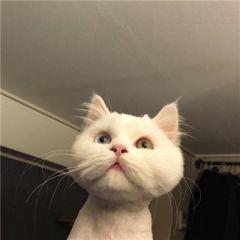微信头像动物可爱猫