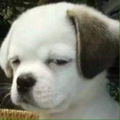 微信头像动物狗