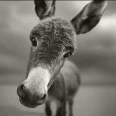微信头像动物搞笑