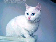 微信空白头像纯白色