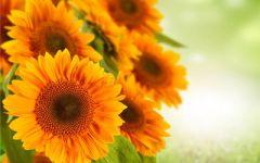 微信吉利头像花朵图片
