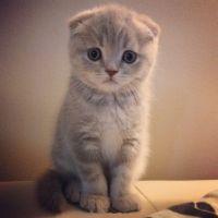 猫头像可爱微信头像
