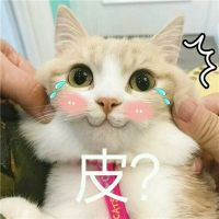 小猫卖萌微信头像