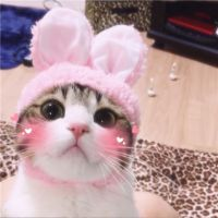 小猫微信头像大全可爱
