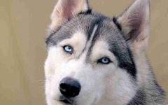 关于狗的微信头像图片