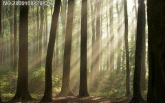 照片背景是树林的做微信头像好不好